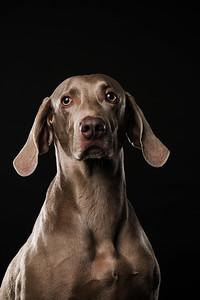 Dog Day 17th December-0014
