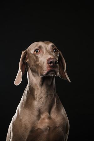 Dog Day 17th December-0005