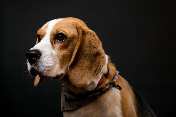 Dog Photobooth Dec2-0016