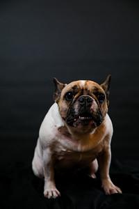 Dog Photobooth Dec2-0003