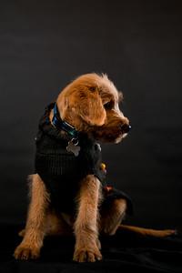 Dog Photobooth Dec2-0012
