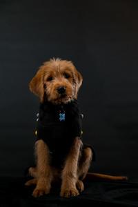 Dog Photobooth Dec2-0015