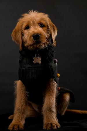 Dog Photobooth Dec2-0011