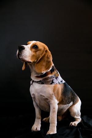 Dog Photobooth Dec2-0018