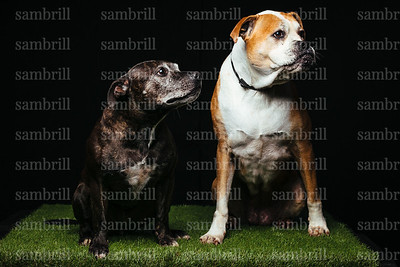 DOGS3341