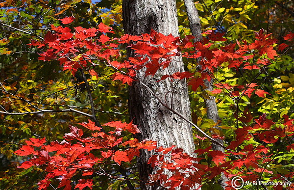 UT Arboretum Oct 2010