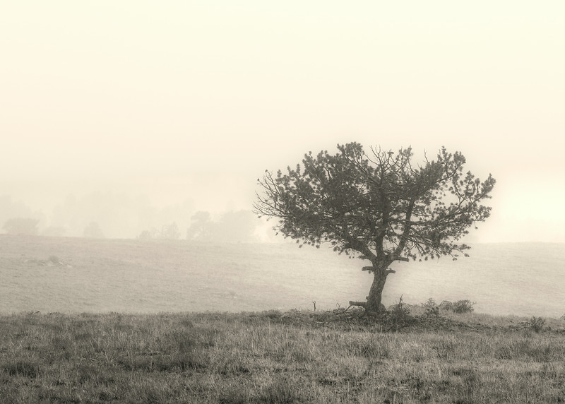 August 6th, 2014 - Obscurity