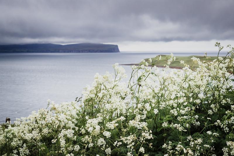 Scottish Summer