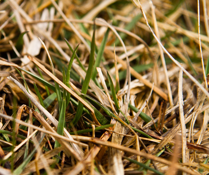 April 7th, 2011<br /> <br /> Green Grass! Finally! Oh how I've missed you!<br /> <br /> Hope you all have a good one!