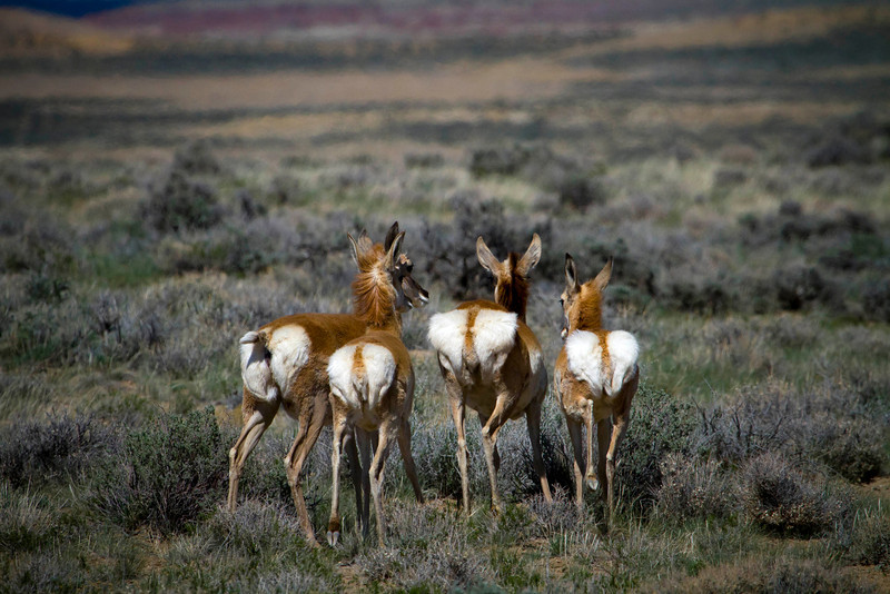 May 18th, 2012 - Antelope Butts<br /> <br /> Happy Friday!