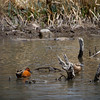 April 21, 2012<br /> <br /> Just some ducks.<br /> Hope you all have a great Saturday!