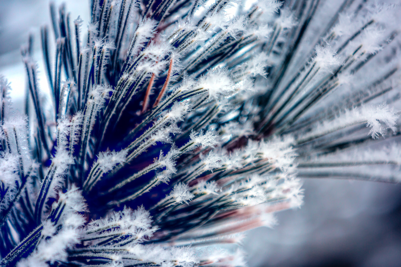 Icy  Macro - January 27th, 2017