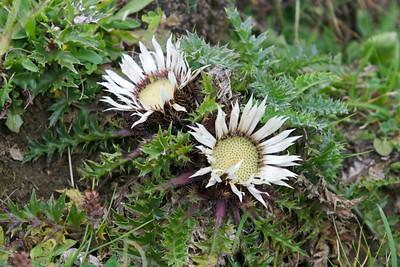 More alm flora.