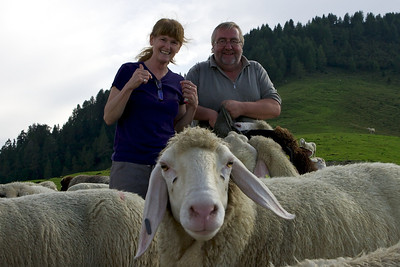This sheep wondered if the camera might taste good.