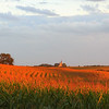 Cathedral in the Cornfields, Gage Co , NE (1)