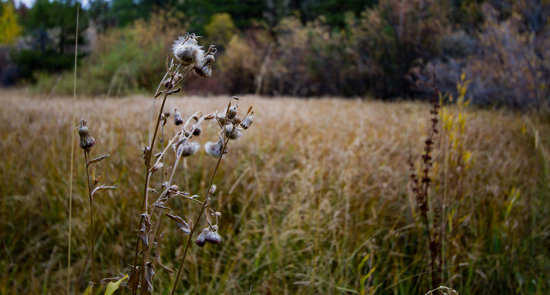 October 9th, 2010<br /> <br /> Probably going to see a lot of fall shots out of this girl - it's like flowers up here, they're both so brief!<br /> To be honest we should have had snow by now, first time in six years up here that we didn't get snow the third week of September!<br /> <br /> Hope you all have an awesome Saturday!