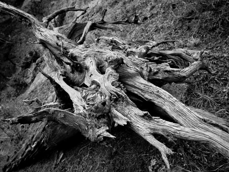 November 14th, 2010 - Gnarly <br /> <br /> Hope you all have a great Sunday!