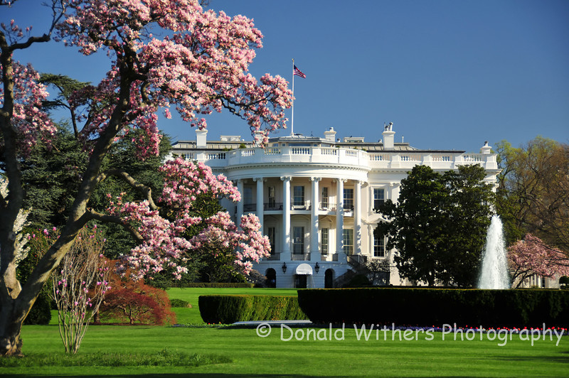 White House | Cherry Blossoms - Photograph was selected by the National Cherry Blossom Festival for use in the 2012 Centennial marketing campaign.