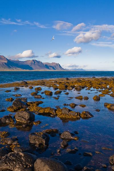 Coast at Budhir, Iceland