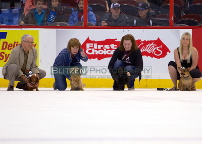 Some of the competitors in the annual wiener dog race.