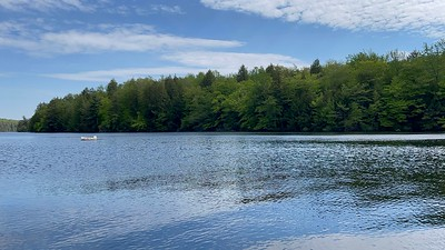 Tolland state forest