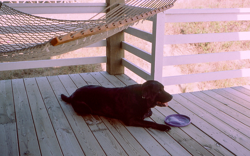 OBX 2000 - Mickey with his beloved Frisbee