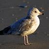 Shore bird - 2001