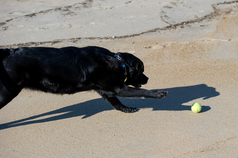Chasing her tennis ball on the beach - OBX - October 2011