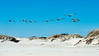 Pelicans flying over the dunes during our tour of 4 wheel drive country - April 24, 2014