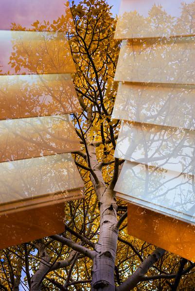 Tree Behind Blinds