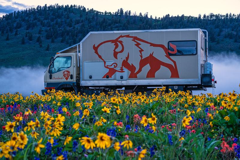 """""""Colorado Wildflowers"""""""