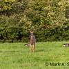 Buck, Deer, HisAbility In Focus, Mark A. Suszek