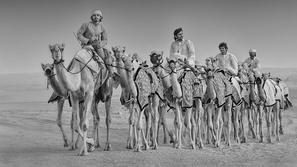 Camel caravan Dubai