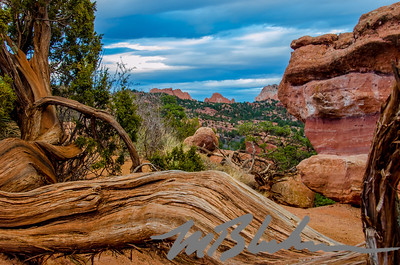 The Garden of the Gods Framed by Juniper