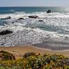 Wildflowers & Pacific Surf