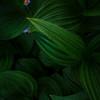 """Hidden Flowers"""