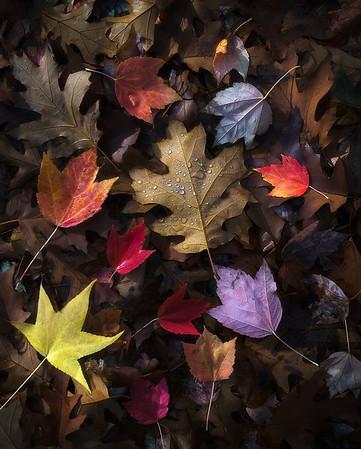 """Autumn Flavors""  (2018)"