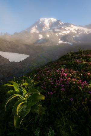 """""""Alpine Garden"""""""