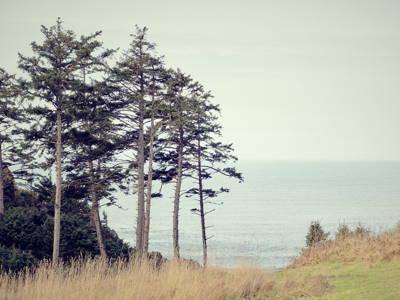 Trees By The Ocean