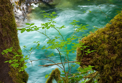 Sol Duc River, Olympic National Park,Washington State