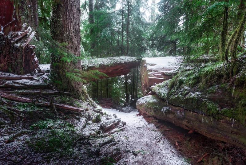 Northwest Winter Hiking