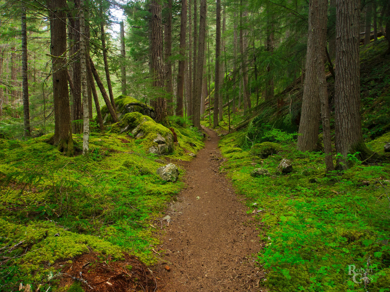 An Olympic Forest Trail