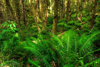 Ferns, Ecola Preserve Oregon Coast.
