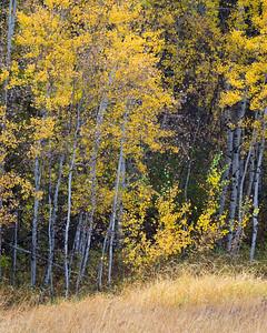 Autumn's Canvas