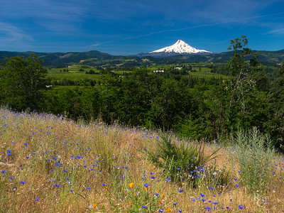 Hood River Valley Wildflower Vista