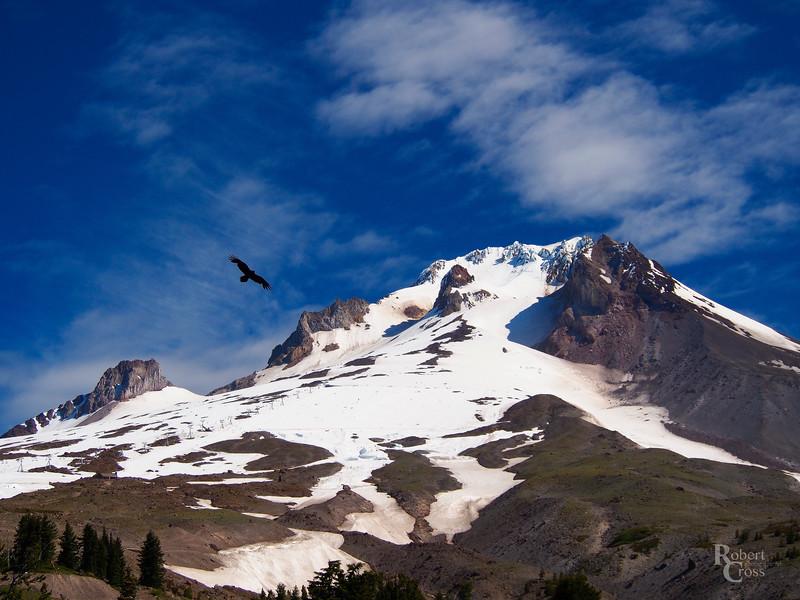 Soaring Over Oregon