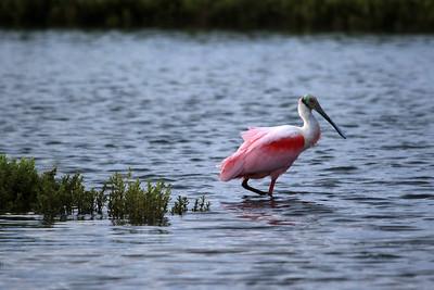 Texas - Padre Island National Shoreline.