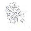 Dying Daffodil 5