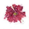 "Dahlia's Mindful Eye 2, 6"" x 7"", acrylic on paper"