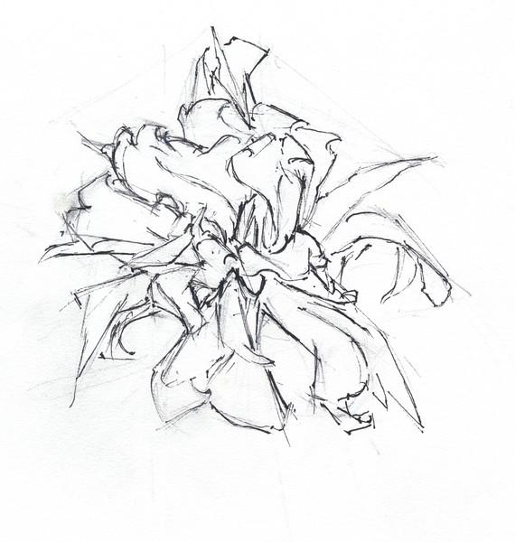 Dying Daffodil 4